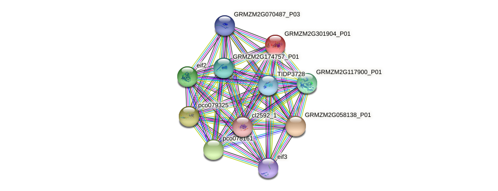 GRMZM2G301904_P01 protein (Zea mays) - STRING interaction network