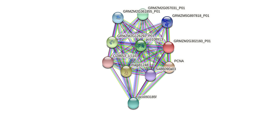 GRMZM2G302160_P01 protein (Zea mays) - STRING interaction network