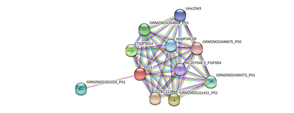 GRMZM2G302245_P01 protein (Zea mays) - STRING interaction network