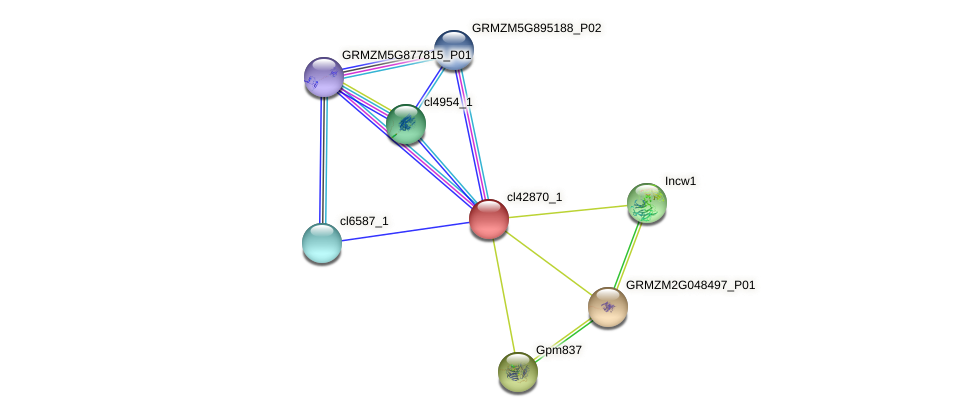 cl42870_1 protein (Zea mays) - STRING interaction network