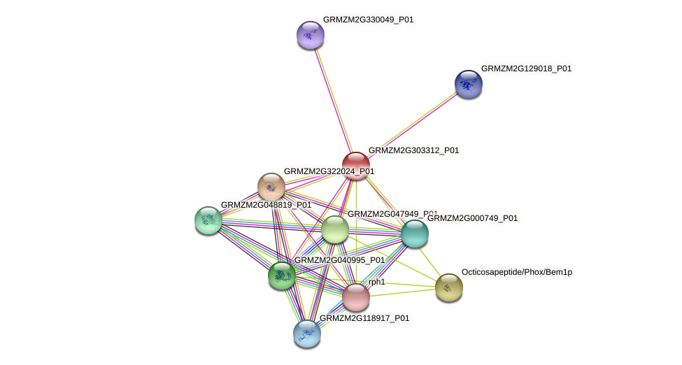 GRMZM2G303312_P01 protein (Zea mays) - STRING interaction network