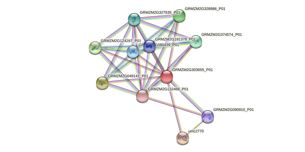 GRMZM2G303655_P01 protein (Zea mays) - STRING interaction network