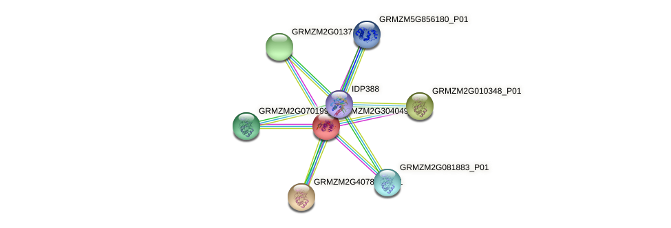 GRMZM2G304049_P01 protein (Zea mays) - STRING interaction network