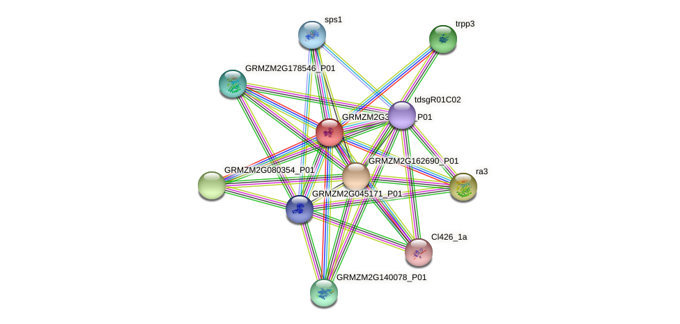 GRMZM2G304274_P01 protein (Zea mays) - STRING interaction network