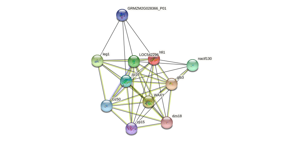 GRMZM2G304548_P01 protein (Zea mays) - STRING interaction network