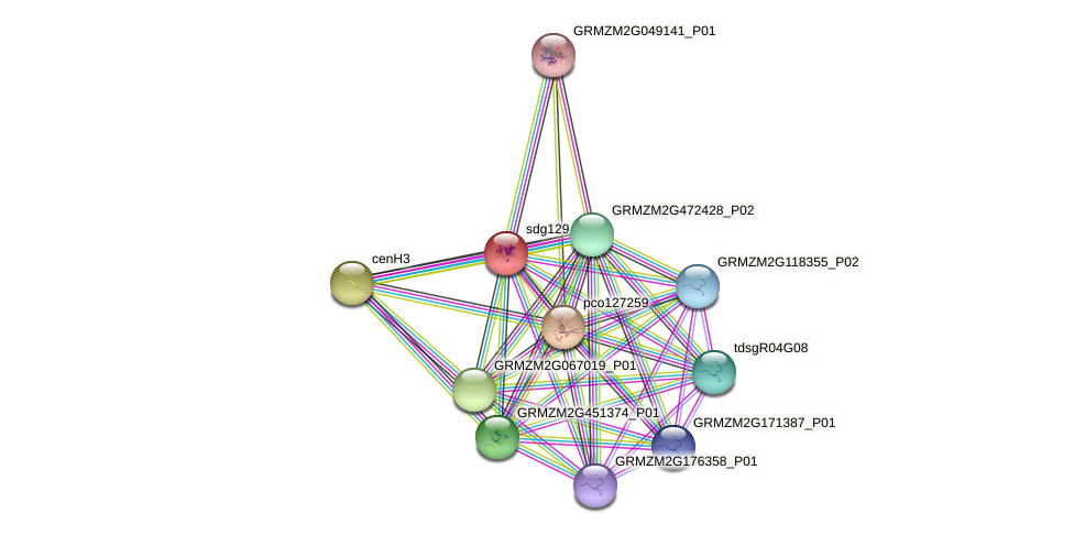 sdg129 protein (Zea mays) - STRING interaction network