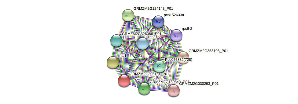 GRMZM2G305154_P01 protein (Zea mays) - STRING interaction network