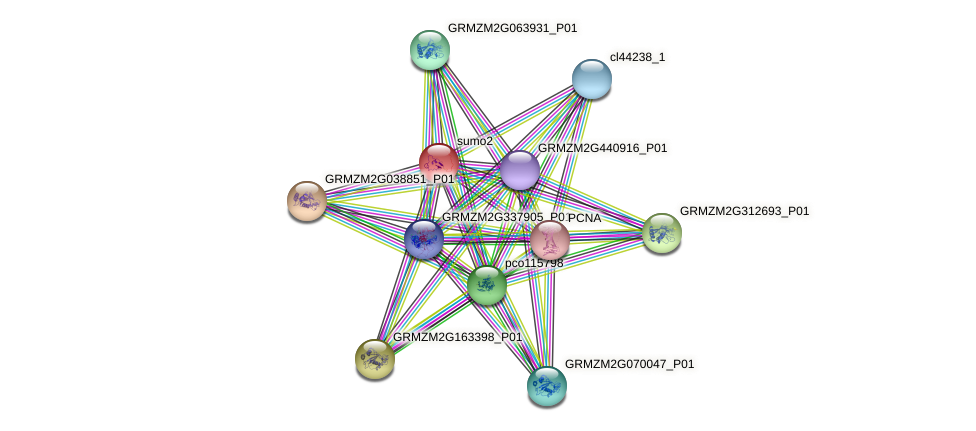GRMZM2G305196_P01 protein (Zea mays) - STRING interaction network