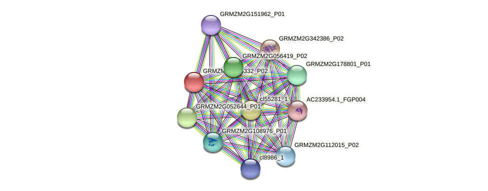 GRMZM2G305332_P02 protein (Zea mays) - STRING interaction network