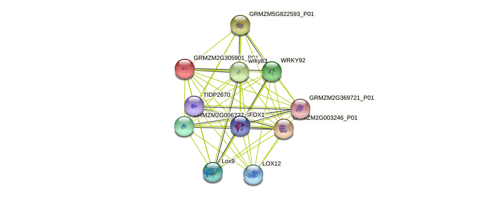 Zm.99477 protein (Zea mays) - STRING interaction network