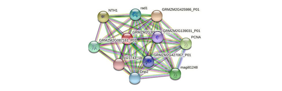 GRMZM2G306193_P01 protein (Zea mays) - STRING interaction network