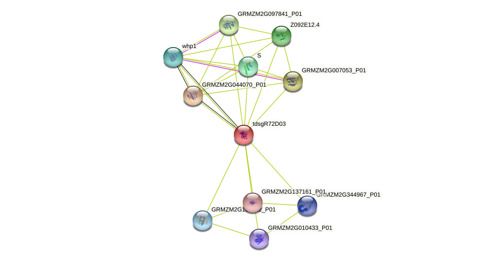 GRMZM2G306328_P01 protein (Zea mays) - STRING interaction network