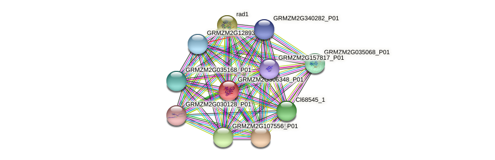 GRMZM2G306348_P01 protein (Zea mays) - STRING interaction network