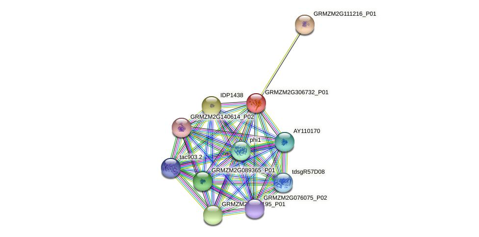 GRMZM2G306732_P01 protein (Zea mays) - STRING interaction network