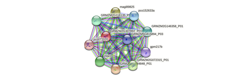 GRMZM2G307892_P01 protein (Zea mays) - STRING interaction network