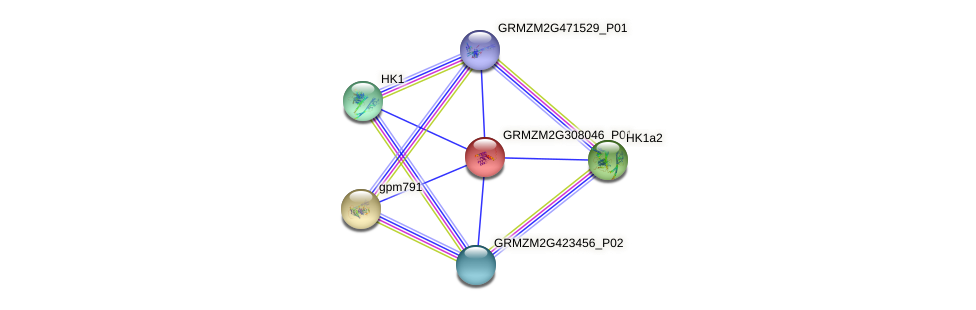 GRMZM2G308046_P01 protein (Zea mays) - STRING interaction network