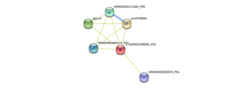 GRMZM2G308083_P01 protein (Zea mays) - STRING interaction network