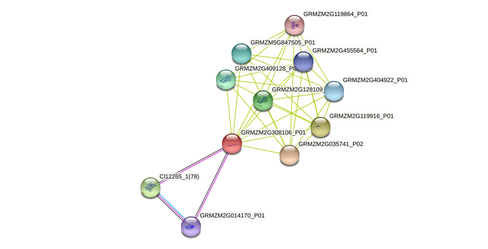 GRMZM2G308106_P01 protein (Zea mays) - STRING interaction network