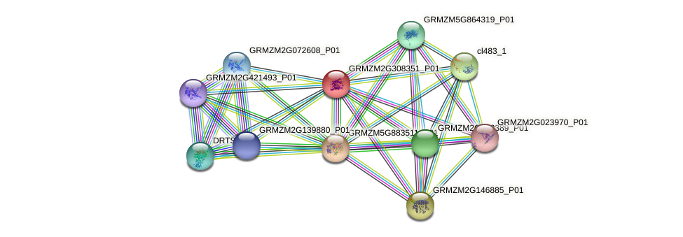 GRMZM2G308351_P01 protein (Zea mays) - STRING interaction network