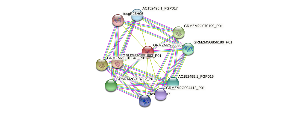 GRMZM2G308369_P01 protein (Zea mays) - STRING interaction network