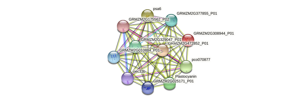 GRMZM2G308944_P01 protein (Zea mays) - STRING interaction network