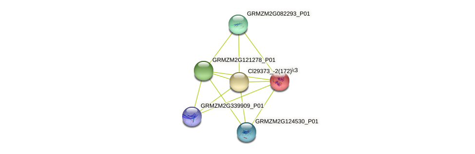 pk3 protein (Zea mays) - STRING interaction network