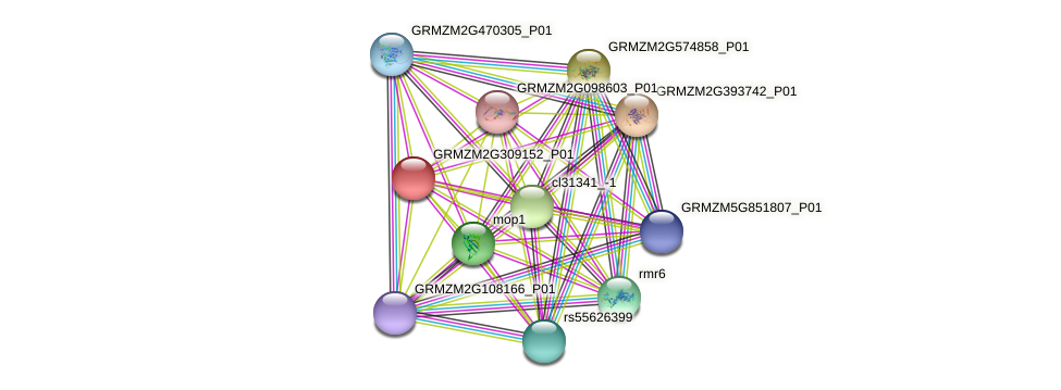 GRMZM2G309152_P01 protein (Zea mays) - STRING interaction network