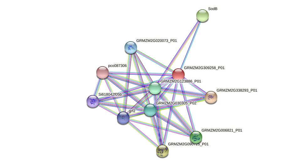 GRMZM2G309258_P01 protein (Zea mays) - STRING interaction network