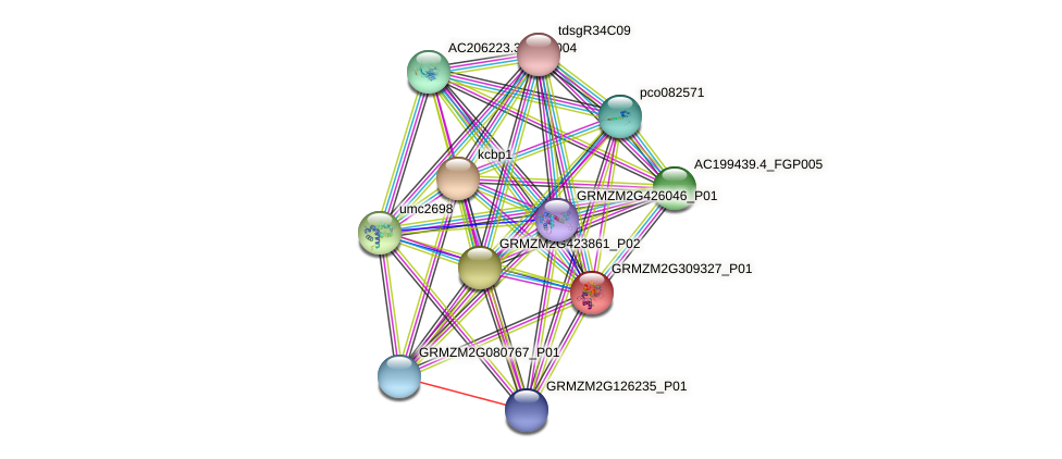 GRMZM2G309327_P01 protein (Zea mays) - STRING interaction network