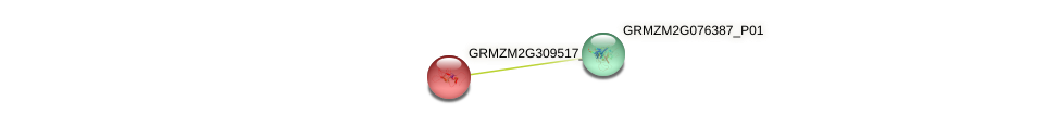 GRMZM2G309517_P01 protein (Zea mays) - STRING interaction network