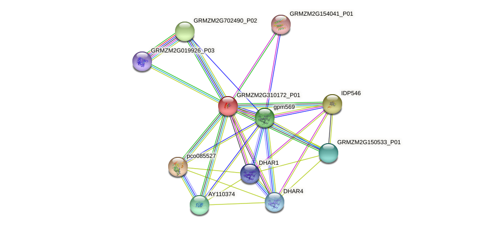 GRMZM2G310172_P01 protein (Zea mays) - STRING interaction network