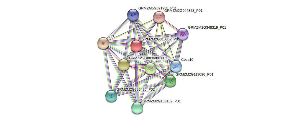 GRMZM2G310362_P01 protein (Zea mays) - STRING interaction network