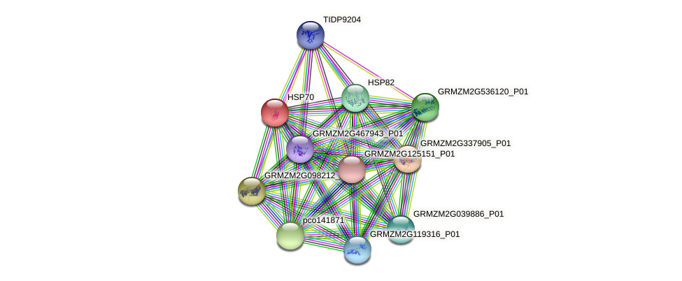 HSP70 protein (Zea mays) - STRING interaction network