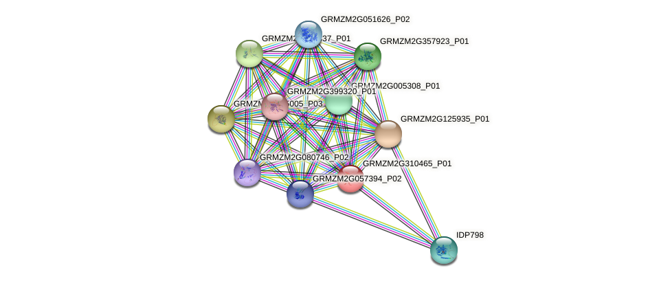 GRMZM2G310465_P01 protein (Zea mays) - STRING interaction network