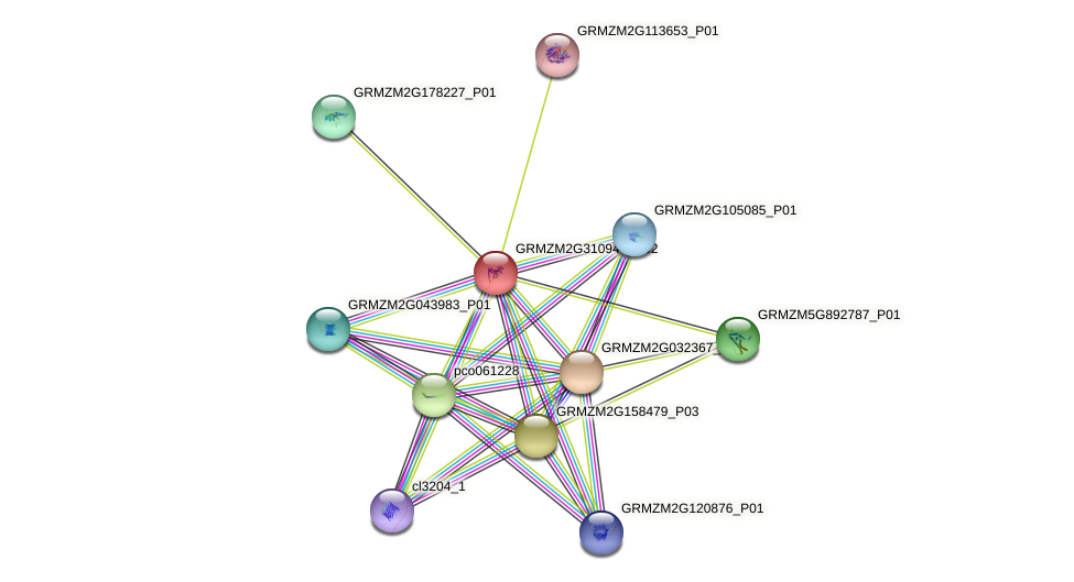 Zm.20401 protein (Zea mays) - STRING interaction network