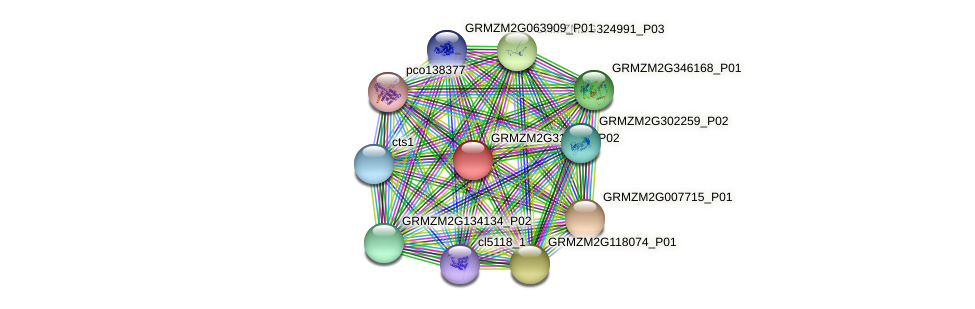 GRMZM2G311024_P02 protein (Zea mays) - STRING interaction network