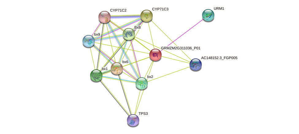 bx10 protein (Zea mays) - STRING interaction network