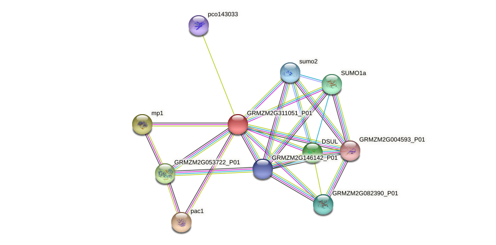 GRMZM2G311051_P01 protein (Zea mays) - STRING interaction network