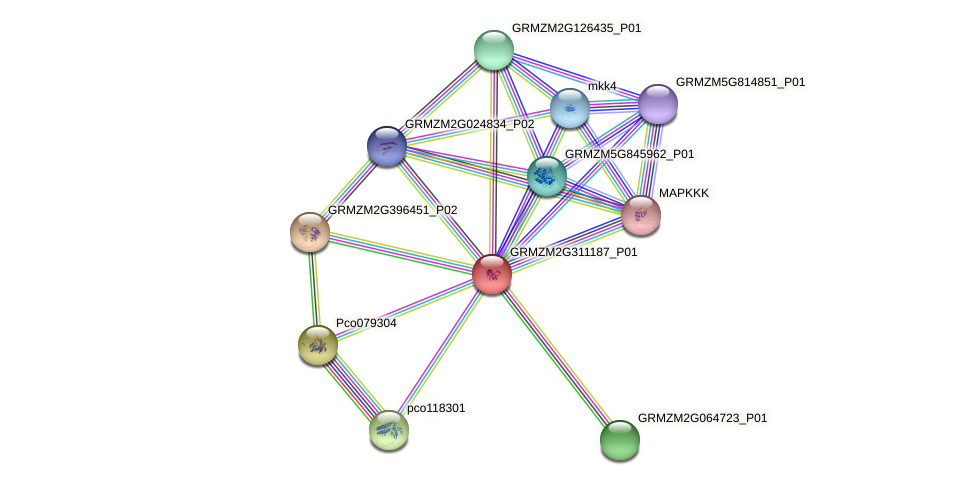 GRMZM2G311187_P01 protein (Zea mays) - STRING interaction network