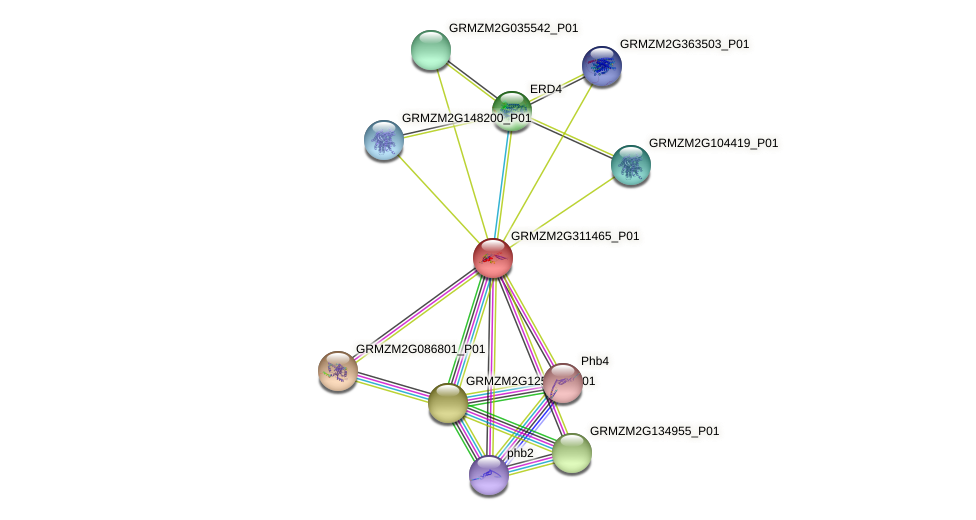 GRMZM2G311465_P01 protein (Zea mays) - STRING interaction network