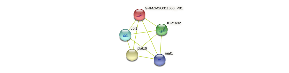 platz2 protein (Zea mays) - STRING interaction network