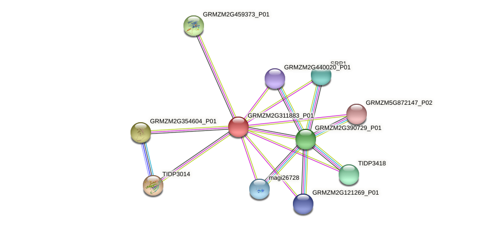 GRMZM2G311883_P01 protein (Zea mays) - STRING interaction network