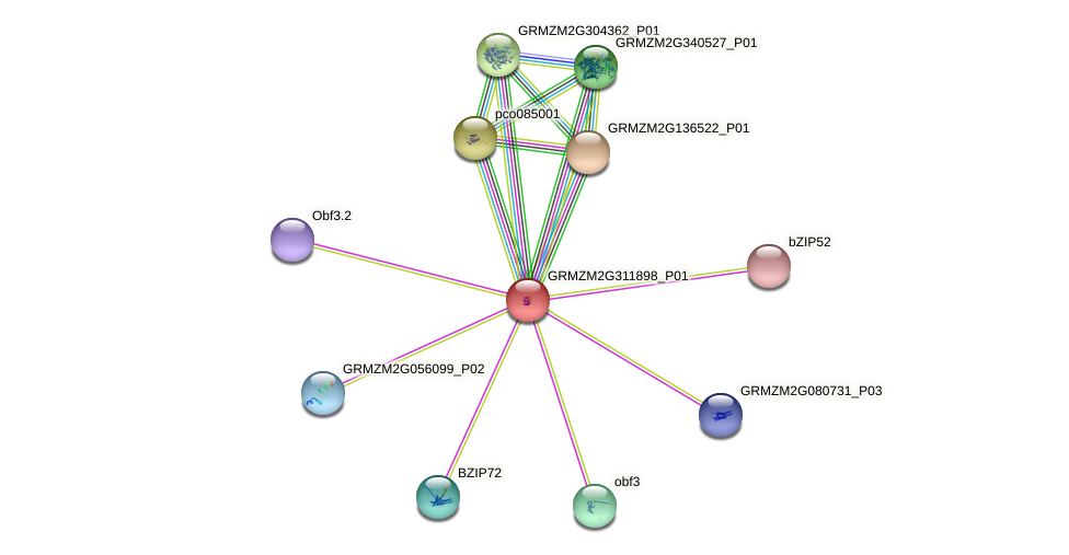 GRMZM2G311898_P01 protein (Zea mays) - STRING interaction network