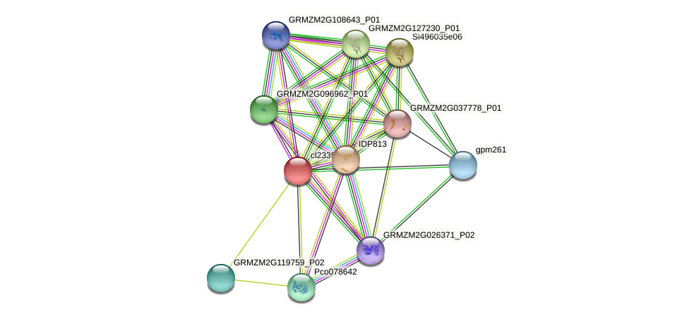 cl23394_1 protein (Zea mays) - STRING interaction network