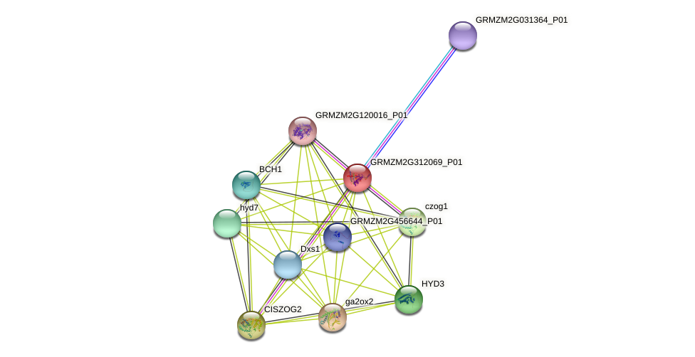 GRMZM2G312069_P01 protein (Zea mays) - STRING interaction network