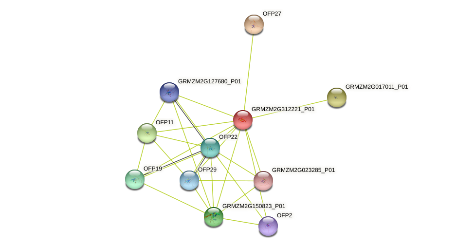 GRMZM2G312221_P01 protein (Zea mays) - STRING interaction network