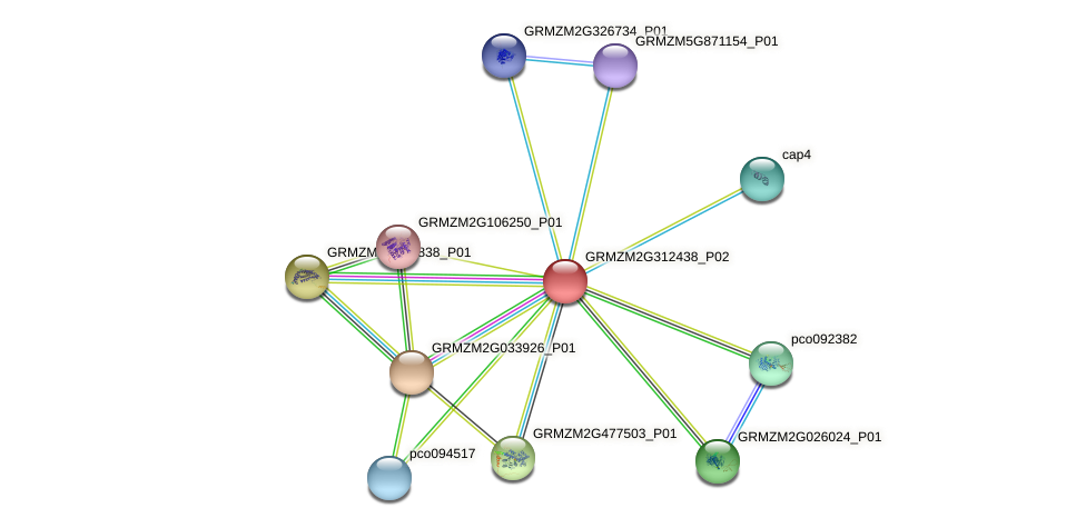 GRMZM2G312438_P02 protein (Zea mays) - STRING interaction network