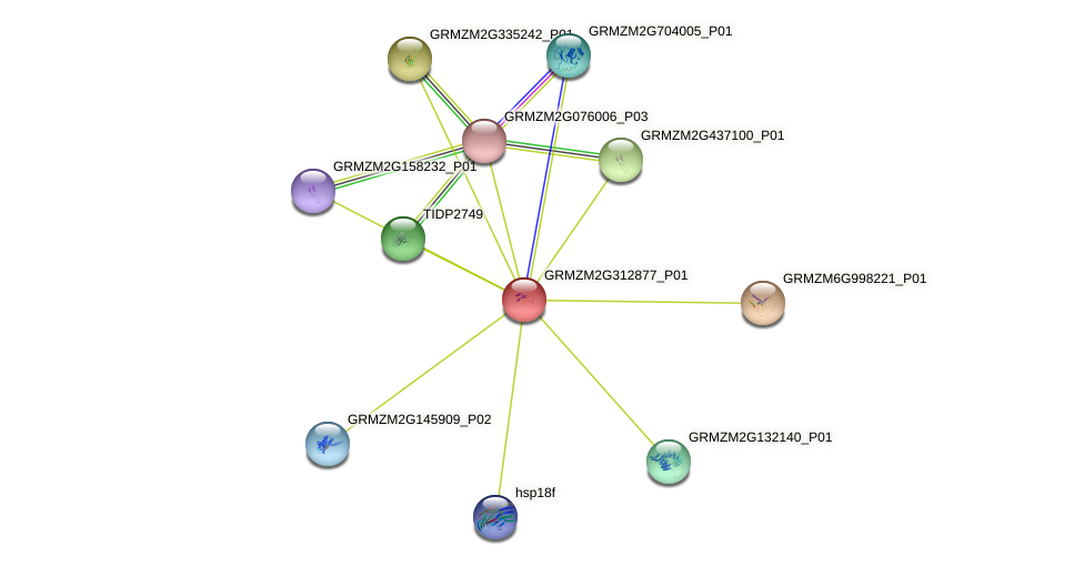 GRMZM2G312877_P01 protein (Zea mays) - STRING interaction network
