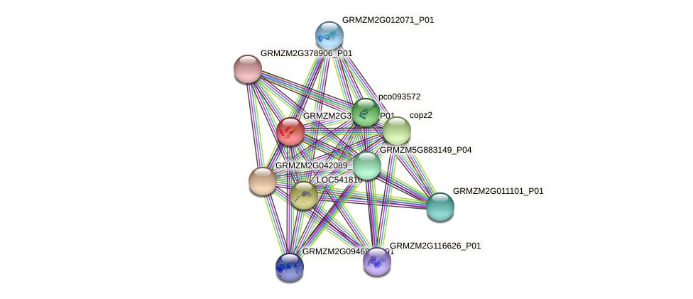 GRMZM2G313536_P01 protein (Zea mays) - STRING interaction network