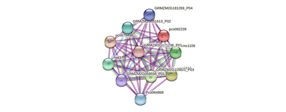 pco092239 protein (Zea mays) - STRING interaction network